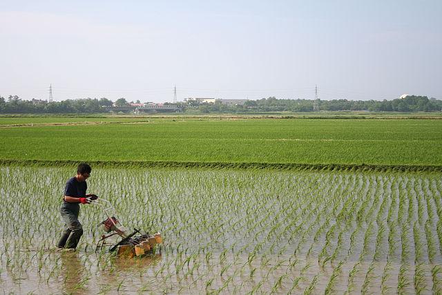 無農薬米の田んぼの機械除草です
