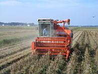 コンバインで大豆を収穫中