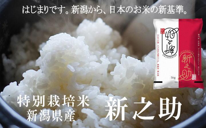 令和2年産 特別栽培米 新之助の販売